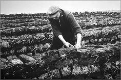 This image depicts a man cutting peat from a bog to use as fuel.  For centuries, this job was done by hand - thereby allowing harvesters to find bodies which often had turned into mummies.  Today, workers in the bogs use mechanical equiment, thereby diminishing the chances of finding more bodies/mummies.