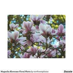 Magnolia Blossoms Floral Photo Canvas Print