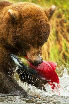 7 Ideas De Lugares De Pesca Para Pescar Pesca Trucha