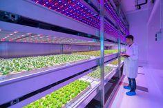 Philips City Farm Research Center