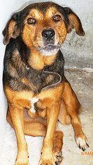 LUI Pets, Animals, Pet Adoption, Animales, Animaux, Animal, Animais, Dieren