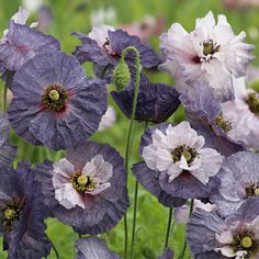 Garden Trees, Trees To Plant, Cut Flowers, Colorful Flowers, Amazing Grays, Gardening For Dummies, Grey Gardens, Zinnias, Garden Planning