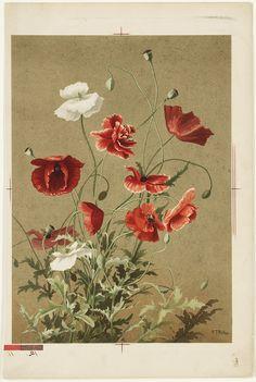 Poppies No. 3