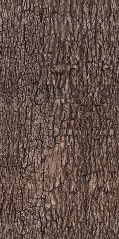 Tree bark - texture, pattern by ivangraphics on DeviantArtYou can find Texture and more on our website.Tree bark - texture, pattern by ivangraphics on DeviantArt Wood Texture Seamless, Light Wood Texture, Seamless Textures, Natural Texture, Kintsugi, Textured Walls, Textured Background, Art Grunge, Texture Photography