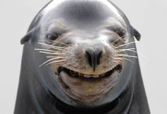The 40 Least Photogenic Animals To Ever Have Their Picture Taken