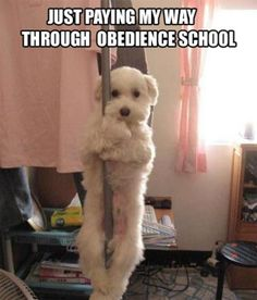 Just paying my way through obedience school.