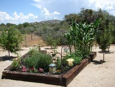 Arizona raised bed vegetable gardens for the arizona desert environment. Fruit Tree Garden, Fruit Trees, Raised Garden Beds, Raised Beds, Railroad Ties Landscaping, Garden Mulch, Vegetable Garden Design, Vegetables Garden, Desert Environment