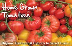 urban farmer seeds