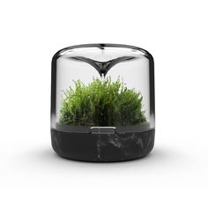 Sanctuary Small is the original mossarium by Botanica. Grow moss in the perfect environment, at work or at home. Growing Moss, How To Grow Taller, Plant Species, Tiny Flowers, Lush Green, Aquaponics, Home And Living, Indoor Plants, Delicate