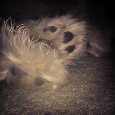 19 ~ Feet #fmsphotoaday
