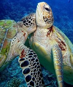Turtle hug! Favourite animal <3