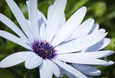 Flowers 8914_  NW University Botanical Gardens, Potchefstroom, South Africa