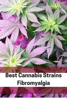 612 Best Mm images in 2019 | Cannabis, Medical cannabis, Weed