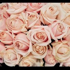 The palest pink long stemmed sweet avalanche roses