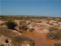 En la estepa abundan los matorrales y las hierbas bajas que crecen en un suelo de color rojizo (por la gran cantidad de óxido de hierro). Es posible distinguir entre diversos tipos de estepa según su ubicación geográfica y características.