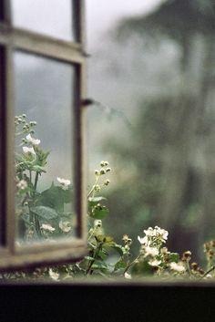 opening the window...