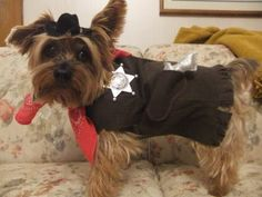 Sheriff Rudy keeping the peace in town during Halloween. Pet Halloween Costumes, Pet Costumes, Daily Record, Costume Contest, Sheriff, Your Pet, Peace, Dogs