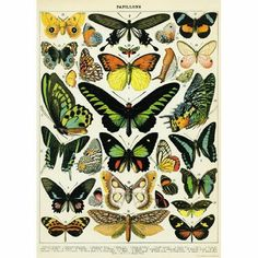 DIY Vintage Poster Frame, for my office botanical prints Diy Poster, Retro Poster, Vintage Butterfly, Butterfly Design, Butterfly Artwork, Butterfly Project, Butterfly Images, Butterfly Frame, Antique Prints