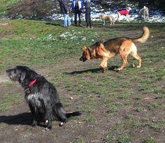 06/03/2016 - Torino con Yuma, Achille, Alena e Dora