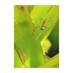 >>>Smart Deals for          A spider eats a fly amid green plant leaves stretched canvas prints           A spider eats a fly amid green plant leaves stretched canvas prints We provide you all shopping site and all informations in our go to store link. You will see low prices onDeals         ...Cleck Hot Deals >>> http://www.zazzle.com/a_spider_eats_a_fly_amid_green_plant_leaves_canvas-192839781640875093?rf=238627982471231924&zbar=1&tc=terrest