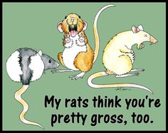 I love this!! Pet rats aren't gross!
