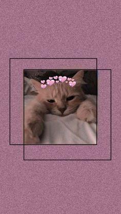 Cute Panda Wallpaper, Butterfly Wallpaper Iphone, Dark Wallpaper Iphone, Cartoon Wallpaper Iphone, Iphone Wallpaper Tumblr Aesthetic, Bear Wallpaper, Cute Patterns Wallpaper, Cute Disney Wallpaper, Animal Wallpaper