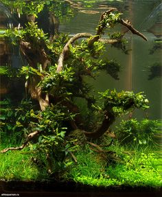 "simonsaquascapeblog: ""Favourites: 'Midday' by Alexander Maletin This shrimp tank was presented at the DENNERLE Scaper's Tank 2014 """