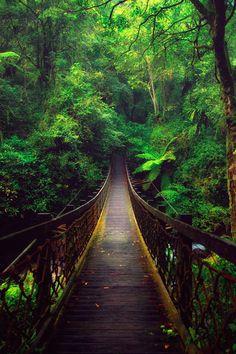 "Path | 道路 | Chemin | путь | Sentiero | Camino | Dōro | Pasaje | проезд | ""A Bridge In The Forest  by Hanson Mao """