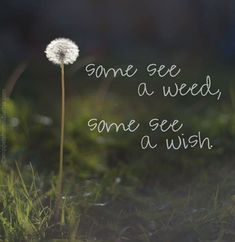 Weed or wish? It's all how you look at it, and we get to choose. From Exceptional Living Facebook 9/25/13.