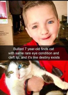 Lustige Katzenbilder - Humour Ninja - Funny Memes and Funny Pictures - Pin Cute Funny Animals, Cute Baby Animals, Funny Cute, Cute Cats, Pretty Cats, Cute Animal Memes, Fancy Cats, Animal Humor, Sweet Stories