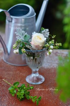 Watering can and white rose ♥