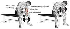 Comment effectuer le Curl biceps isoler