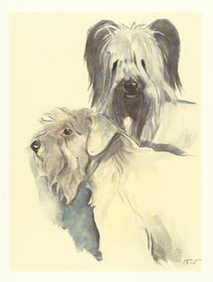 Sealyham Terrier and Skye Terrier colour print by Willie Bar 1975 dog print