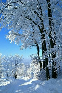 photo scenery Winter - Everything from Snow, New Years, and Christmas Web site : Winter Photography, Landscape Photography, Nature Photography, Winter Magic, Winter Snow, Winter White, Winter Pictures, Nature Pictures, Foto Picture