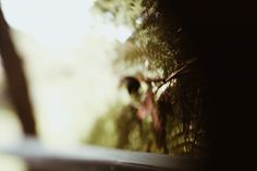 Photo by Tessa Cheetham  #leaves #plants #forest #nature #outdoors #green #bushes #trees #mountglorious #australia #photography #naturephotography #free-lens #free-lensphotography #freelensphotography #cafe