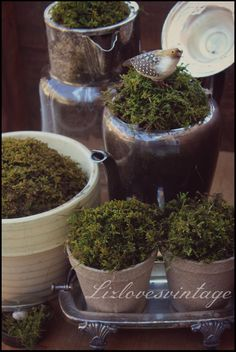 LizlovesVintage: the look and feel of spring moss::