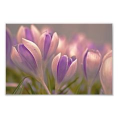 Purple Rain. Photographic Print