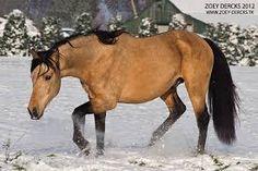 paarden andalusier - Google zoeken