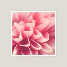 5 x 5 Prints  Look Closely / Pink Pastel Color / by oyphotography