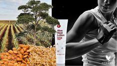 A régi-új piros krém Aloe Heat Lotion: a legenda visszatér. Az aloé találkozása a mentollal, a szezámmaggal, a kajszibarackkal és az eukaliptusszal. Vajon mitől lett a beceneve piros krém? #gabokakucko