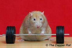 Waff grew into a huge squish of a rat. Description from dapper.com.au. I…