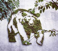 PHOTOS: How to Tag Your Walls With Eco-Friendly Moss Graffiti ...