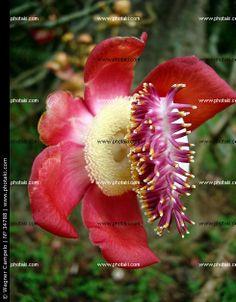 http://www.photaki.com/picture-tropical-flower-rio-de-janeiro_34788.htm
