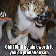 Funny Cat Memes | the game 40 glocc fight #funny memes #cat memes #funny cat pictures