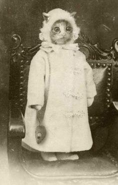 奇妙なヴィンテージ·写真·猫の肖像画
