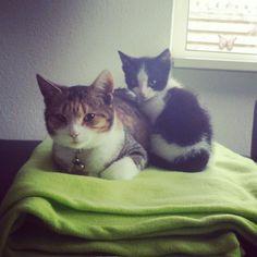Sheeva & Sammy