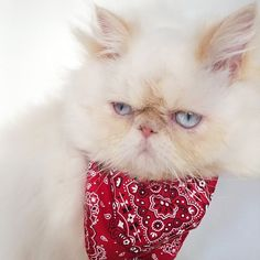 Não #LordAries #AriesMeow #WeeklyFluff #CatsOfInstagram