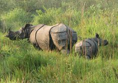 A man died in a rhino attack at the Ratnanagar-based Panchakanya Community Forest in Chitwan on Tuesday.