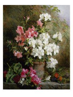 Still Life of Azaleas Giclee Print by Annie Feray Mutrie at Art.com