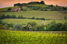 ITALY Mag's Wine Column - Vini Vino Vinum - looks at the rise and fall of the Super Tuscan wines